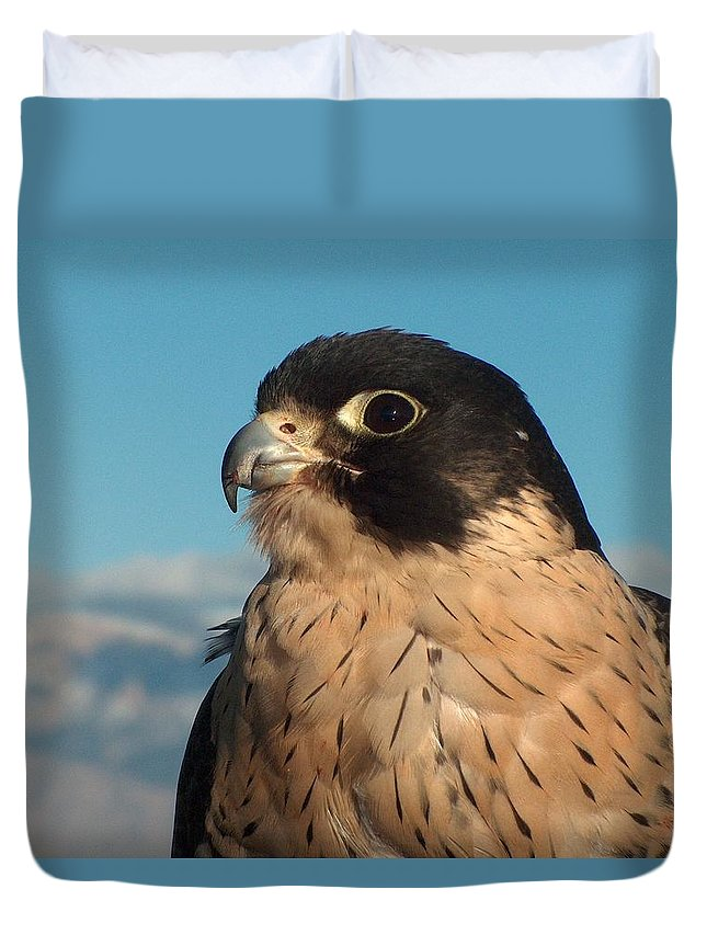 Peregrine Falcon Duvet Cover featuring the photograph Peregrine Falcon by Tim McCarthy