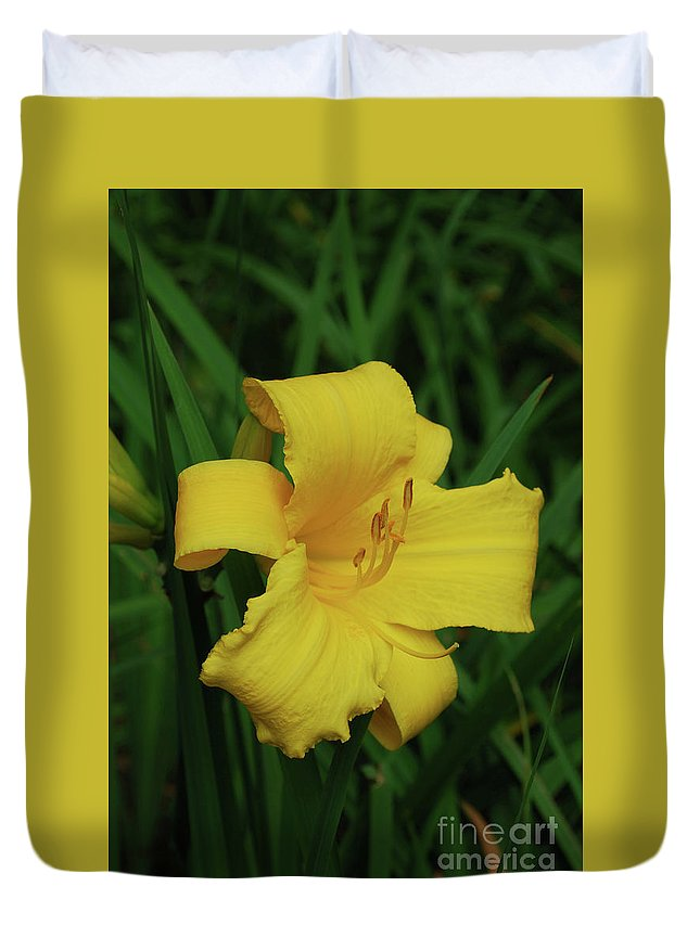 Lily Duvet Cover featuring the photograph Perfect Yellow Daylily Flowering In A Garden by DejaVu Designs
