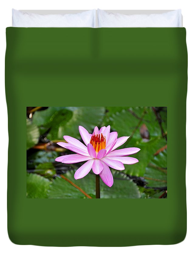 Flower Duvet Cover featuring the photograph Perfectly Pink by David Lee Thompson