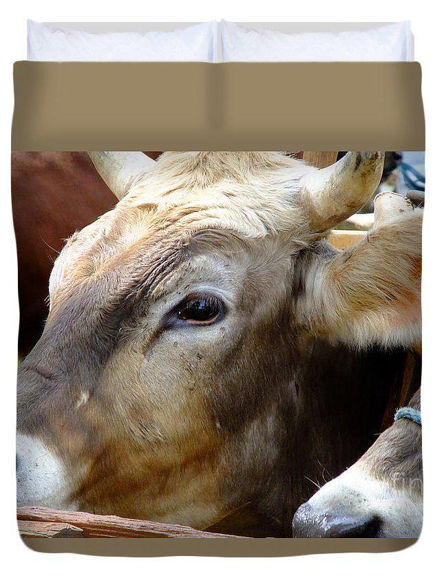 Animals Duvet Cover featuring the photograph Performance Anxiety by RC DeWinter