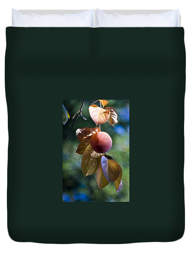 Trees Duvet Cover featuring the photograph Persimmon Tree by Norman Andrus