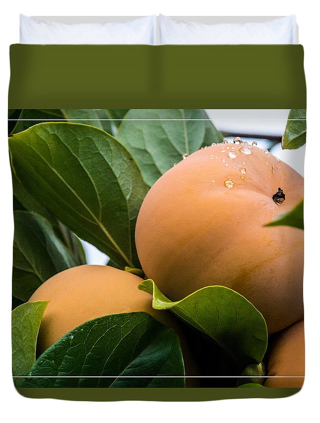 Persimmons Duvet Cover featuring the photograph Persimmons Ready For Harvest by Mick Anderson