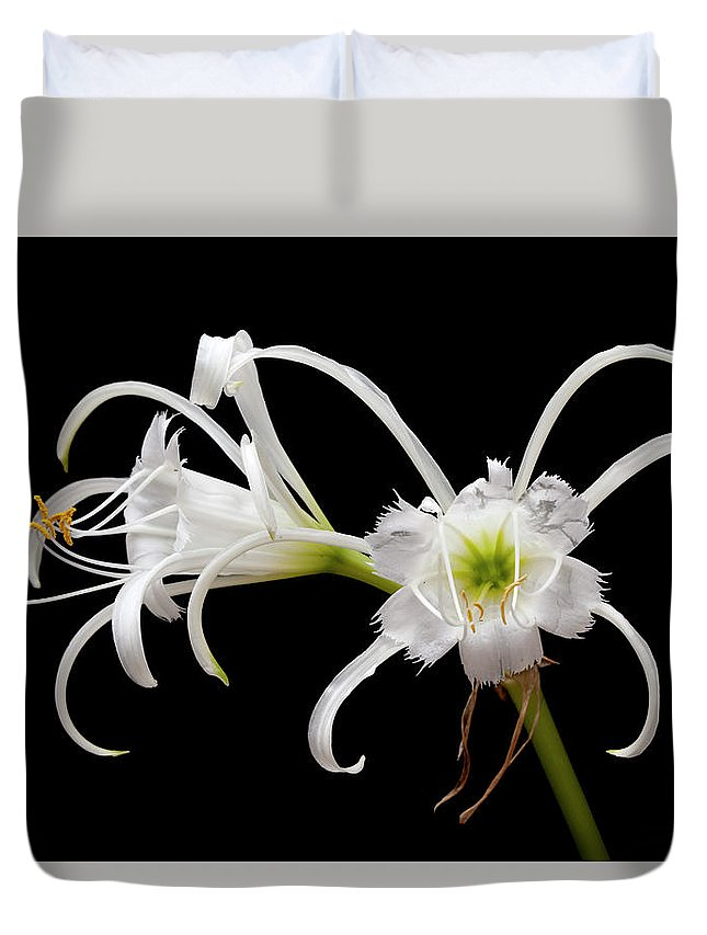 Preruvian Daffodils Duvet Cover featuring the photograph Peruvian Daffodils by George Sanquist