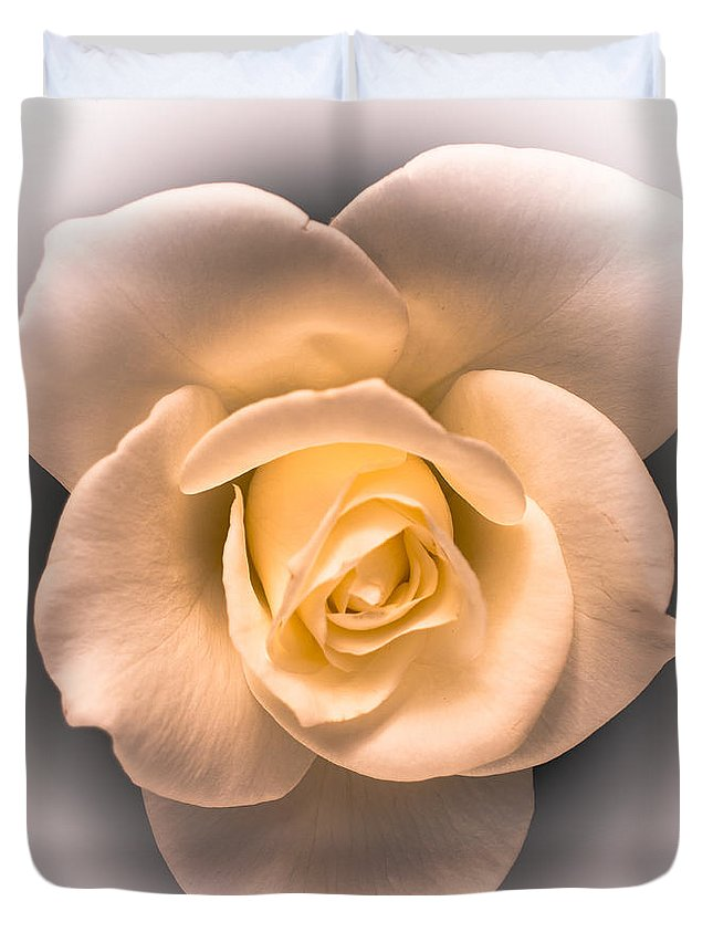 Rose Duvet Cover featuring the photograph Petal Pleasure by William Atkins