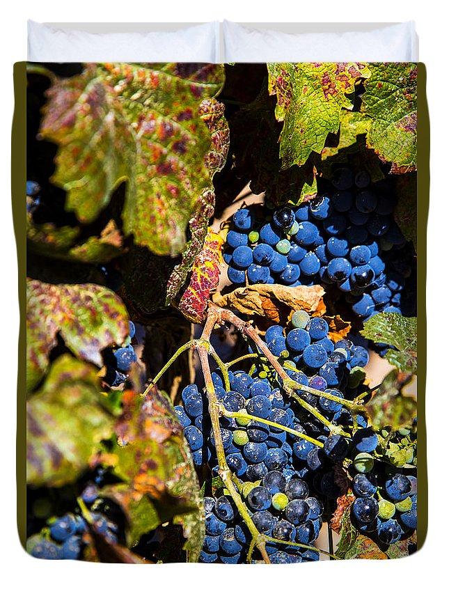 Wine Grapes Vineyards Duvet Cover featuring the photograph Petit Verdot by Rick Bragan