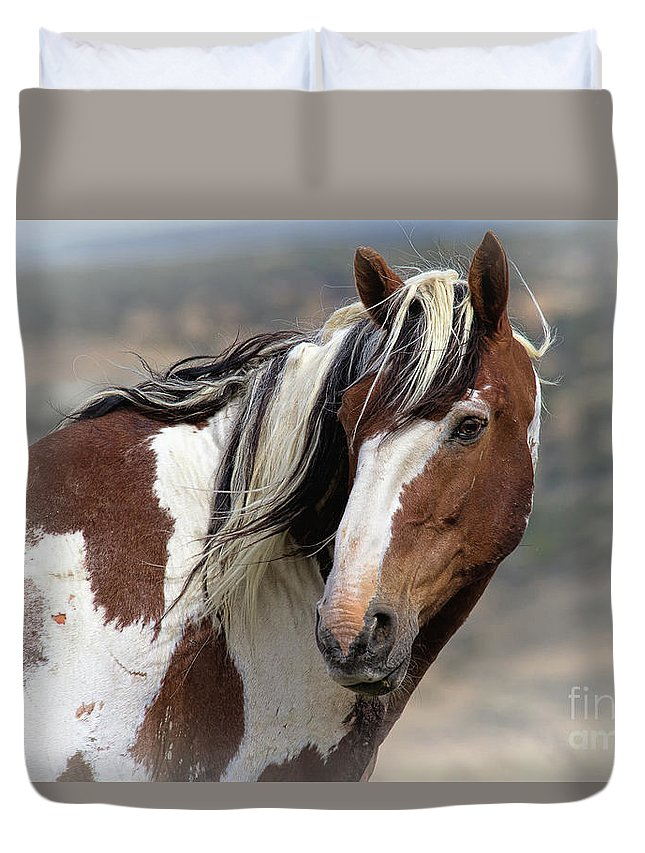 Stallion Duvet Cover featuring the photograph Picasso by Jim Garrison