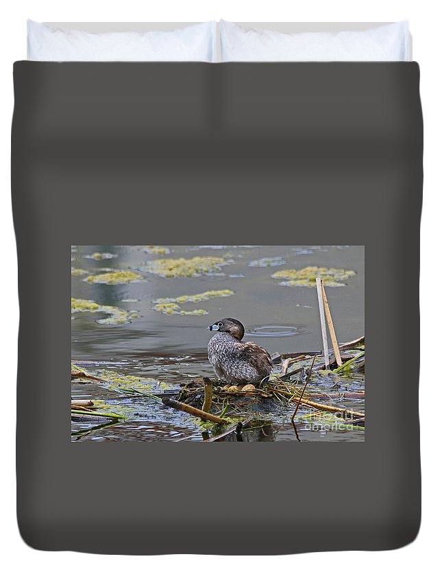 Pied Duvet Cover featuring the photograph Pied-billed Grebe On Eggs by Craig Corwin
