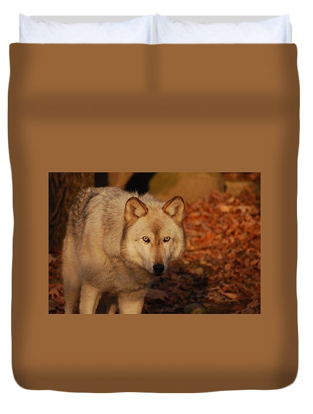 Wolf Duvet Cover featuring the photograph Piercing Eyes by Lori Tambakis