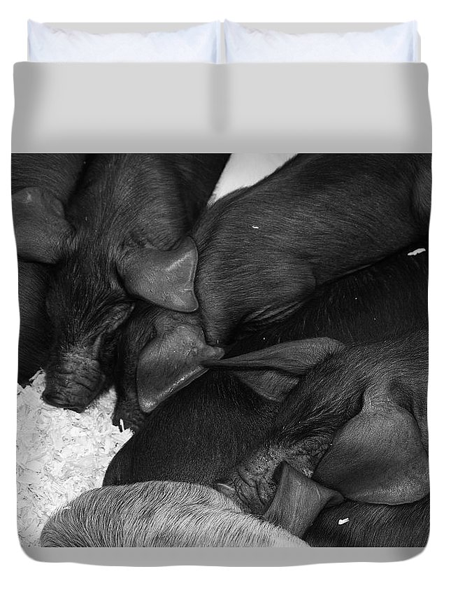 Pig Duvet Cover featuring the photograph Pig Pile by Cathy Mahnke
