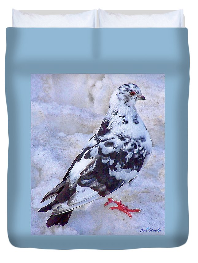 Pigeons Duvet Cover featuring the photograph Pigeon On Ice 1 by John Selmer Sr