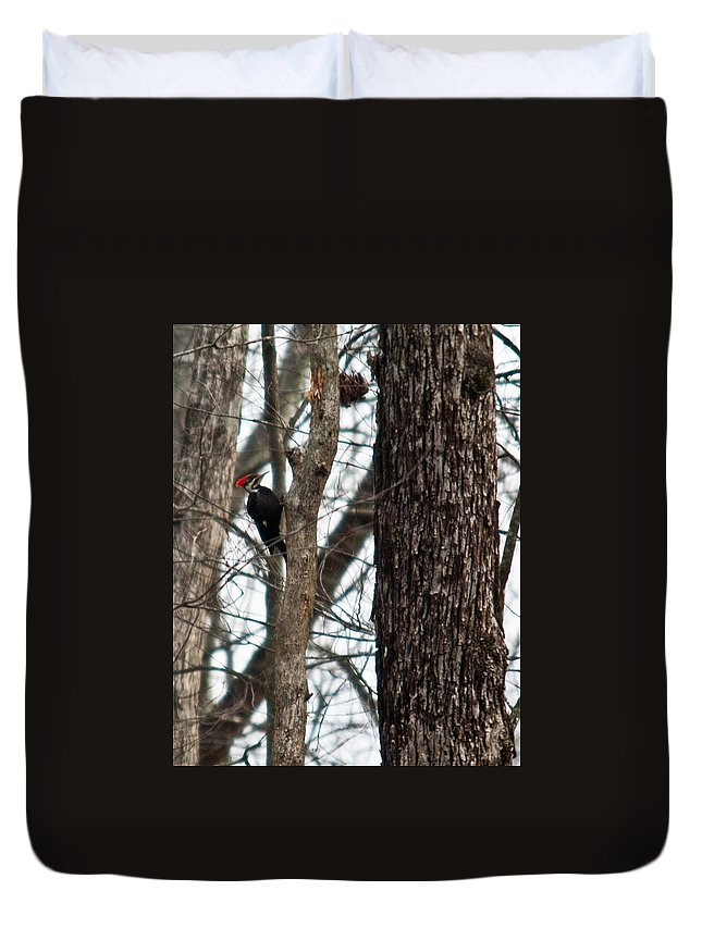 Cumberland Duvet Cover featuring the photograph Pileated Billed Woodpecker by Douglas Barnett