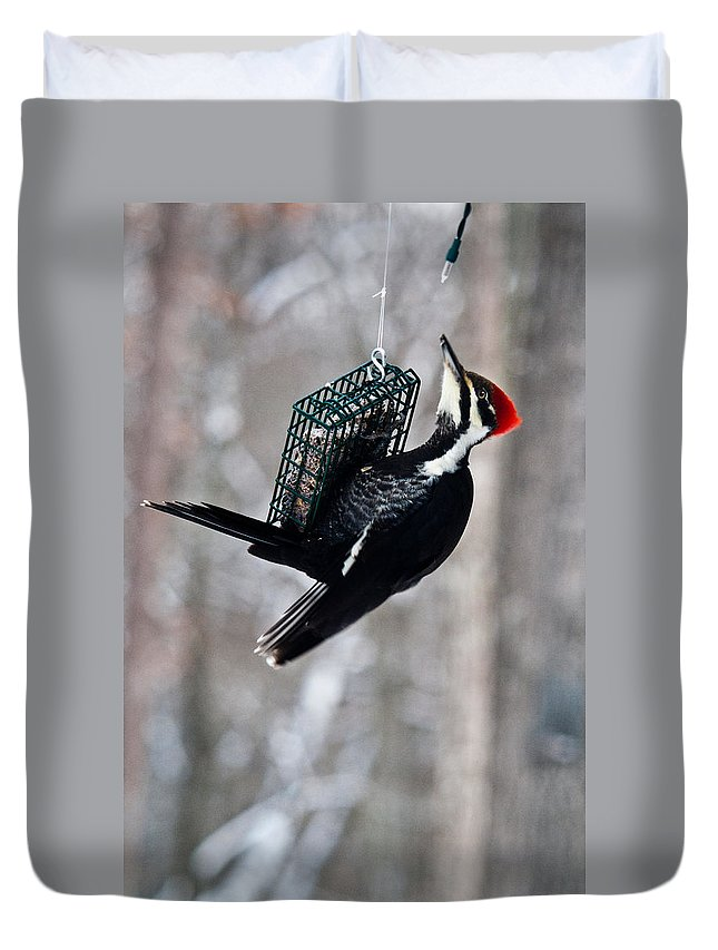 Cumberand Duvet Cover featuring the photograph Pileated Billed Woodpecker Feeding 1 by Douglas Barnett