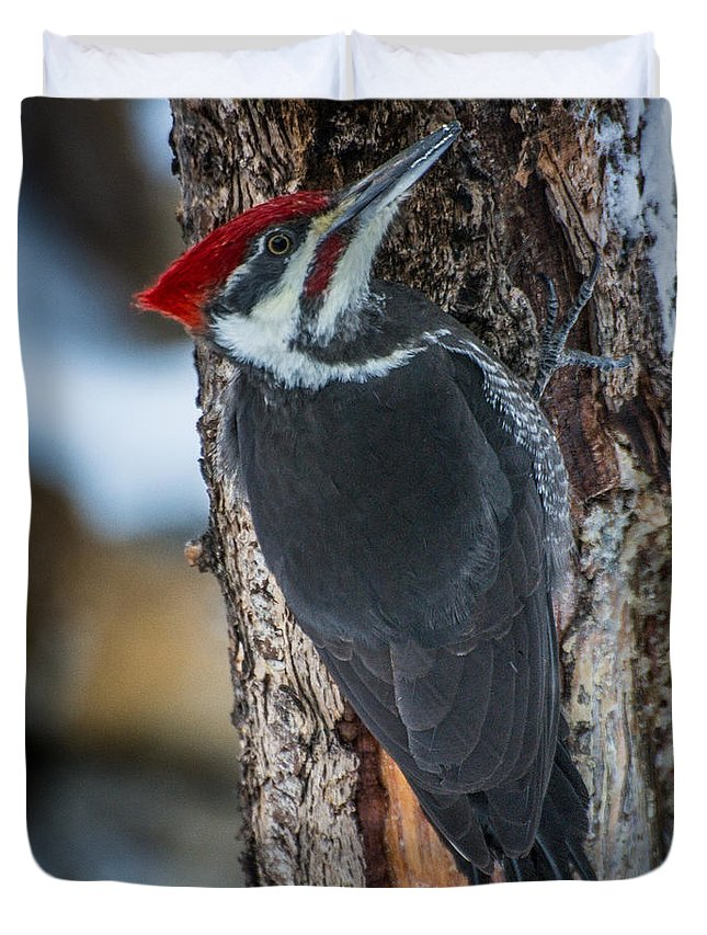 Bird Duvet Cover featuring the photograph Pileated Woodpecker by Constance Puttkemery