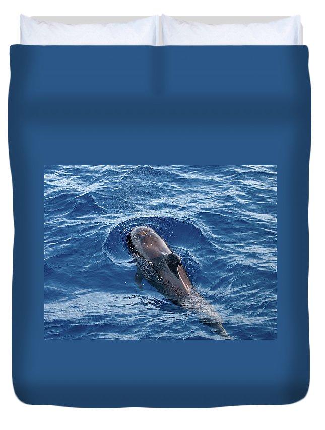 Valasretki Duvet Cover featuring the photograph Pilot Whale 2 by Jouko Lehto
