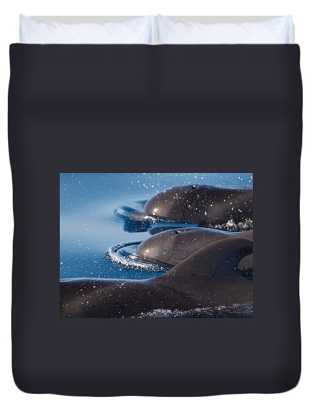 Spain Duvet Cover featuring the photograph Pilot Whales 1 by Jouko Lehto