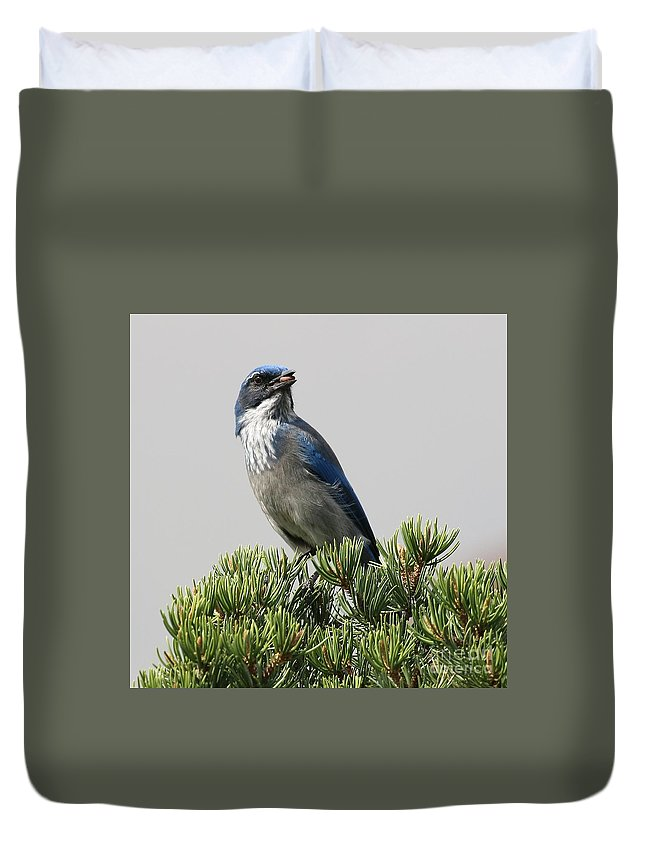 Woodhouse's Scrub-jay Duvet Cover featuring the photograph Pine Nut Delight Scrub Jay by Angela Koehler