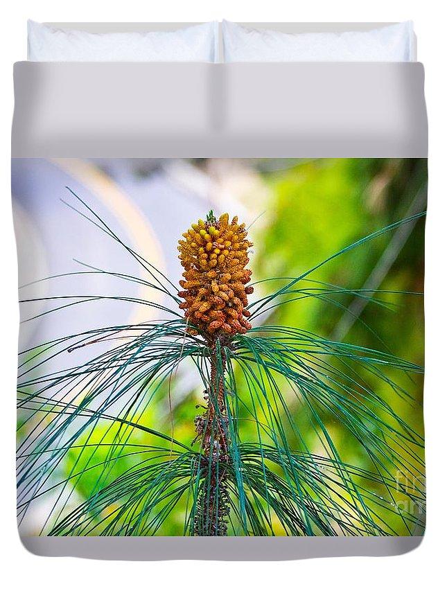 Blossoming Duvet Cover featuring the photograph Pine Road by Marta Robin Gaughen