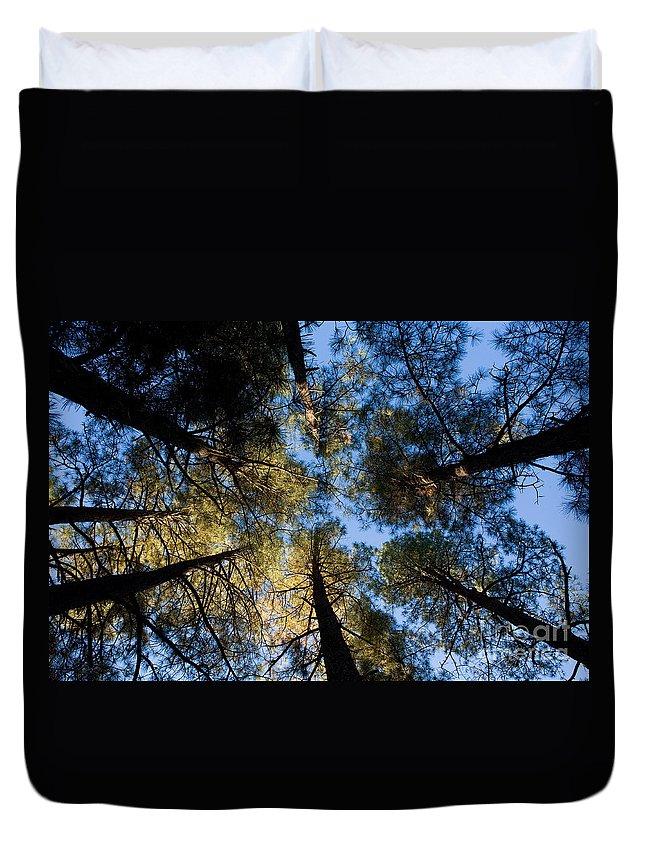 Pine Trees Duvet Cover featuring the photograph Pine Trees Near Ruidoso Nm by Matt Suess