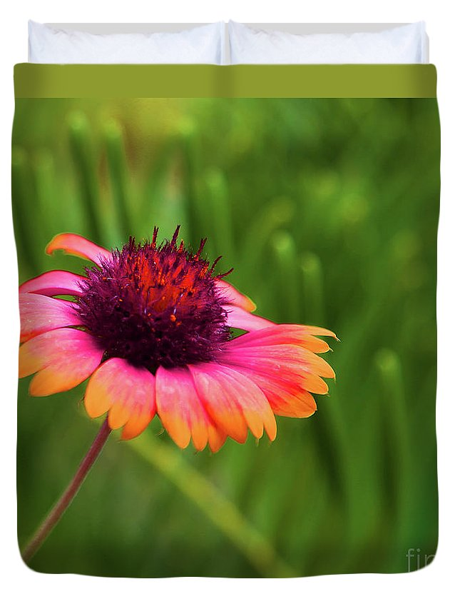 Healing Art Duvet Cover featuring the photograph Pink And Orange Wild Daisy by Eluv