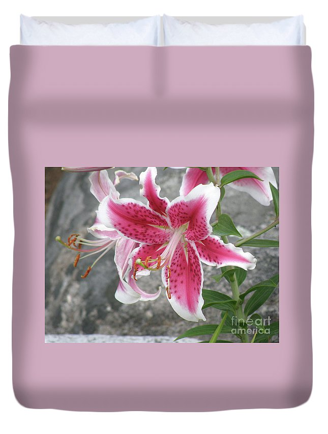Lily Duvet Cover featuring the photograph Pink And White Stargazer Lily In A Garden by DejaVu Designs