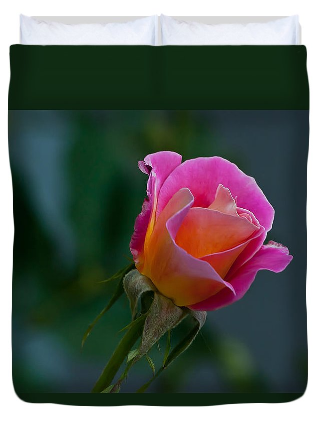 Appreciation Duvet Cover featuring the photograph Pink And Yellow Rose by Emerald Studio Photography