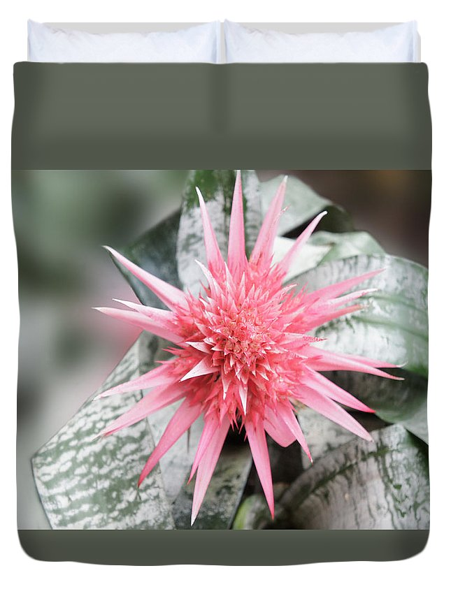 Bromeliad Duvet Cover featuring the photograph Pink Bromeliad by Art Spectrum