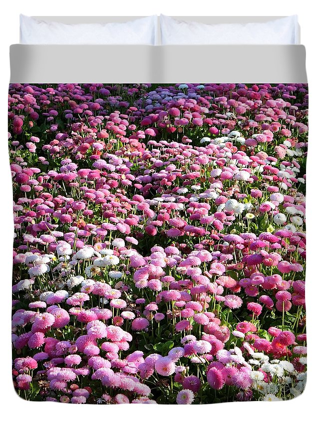 English Daisies Duvet Cover featuring the photograph Pink Button Pom Flowers by Carol Groenen