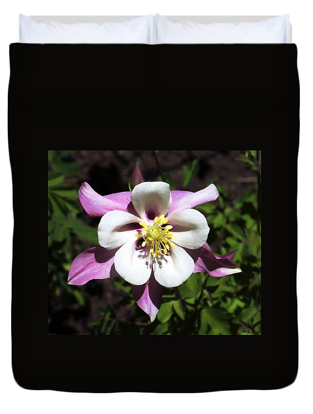 Columbine Duvet Cover featuring the photograph Pink Columbine by Marilyn Hunt