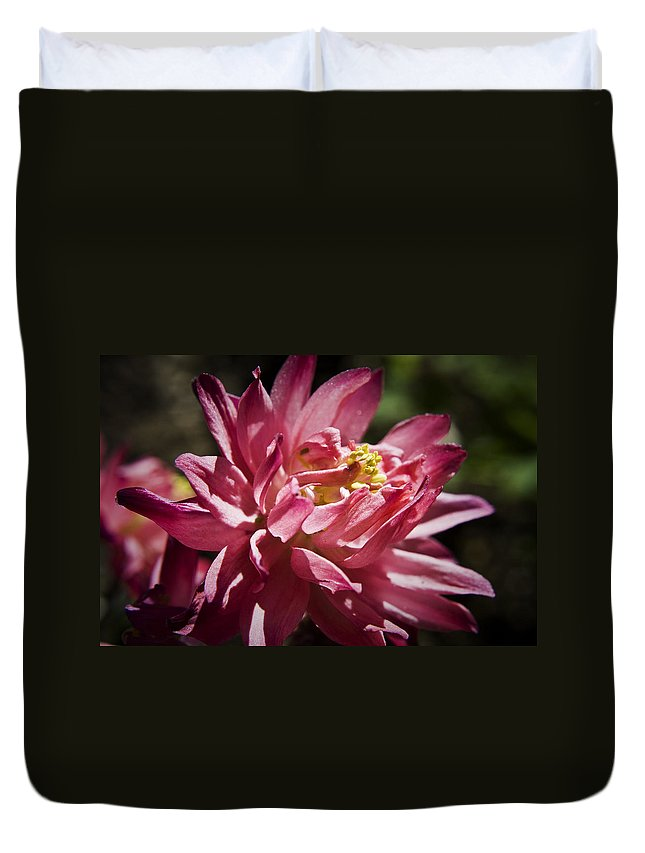 Columbine Duvet Cover featuring the photograph Pink Columbine by Teresa Mucha