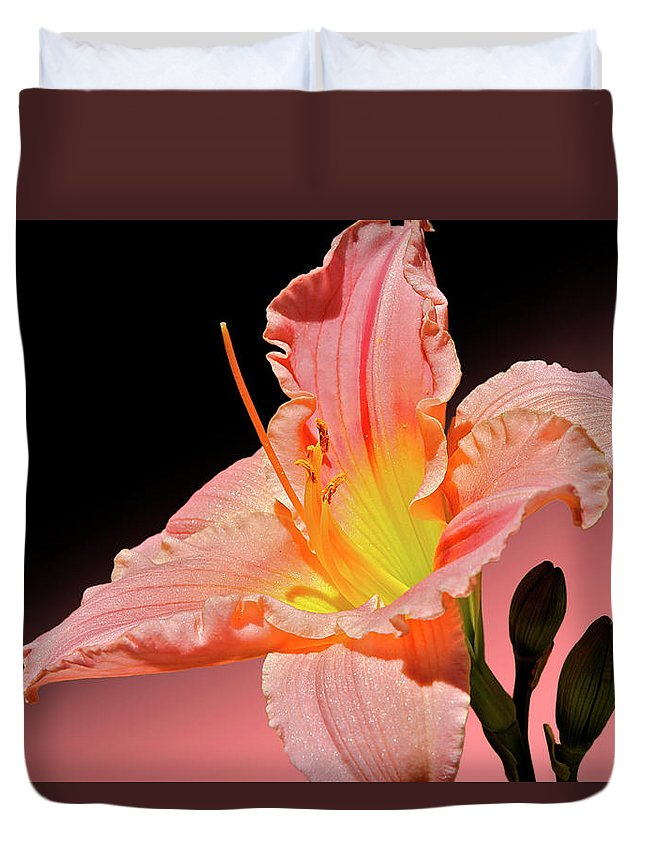 Daylily Duvet Cover featuring the photograph Pink Daylily by Phyllis Denton