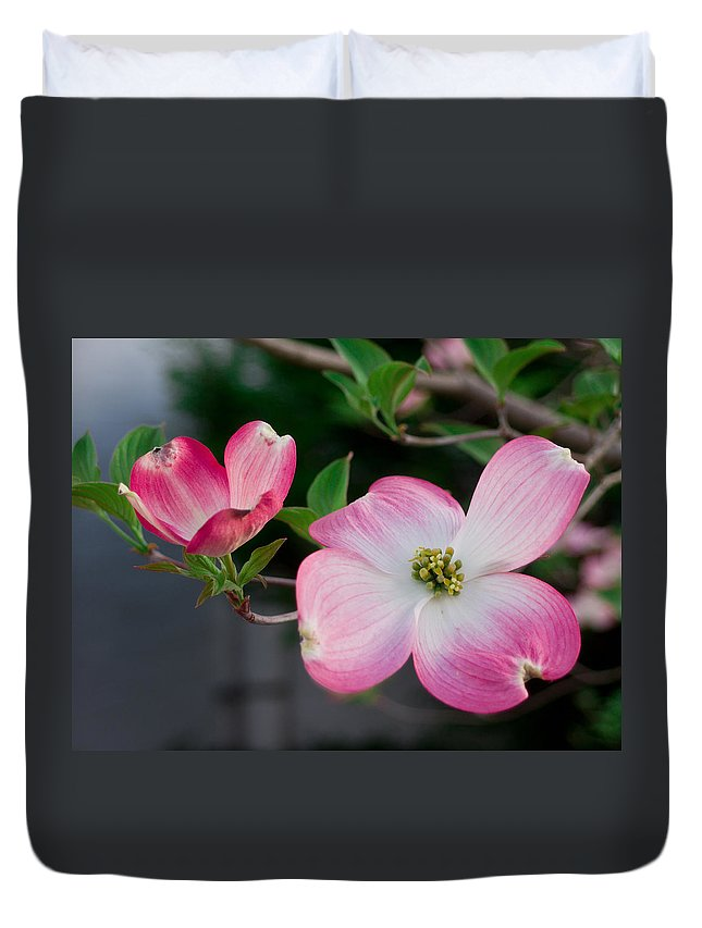 Spring Duvet Cover featuring the photograph Pink Dogwood In The Morning Light by Lori Coleman