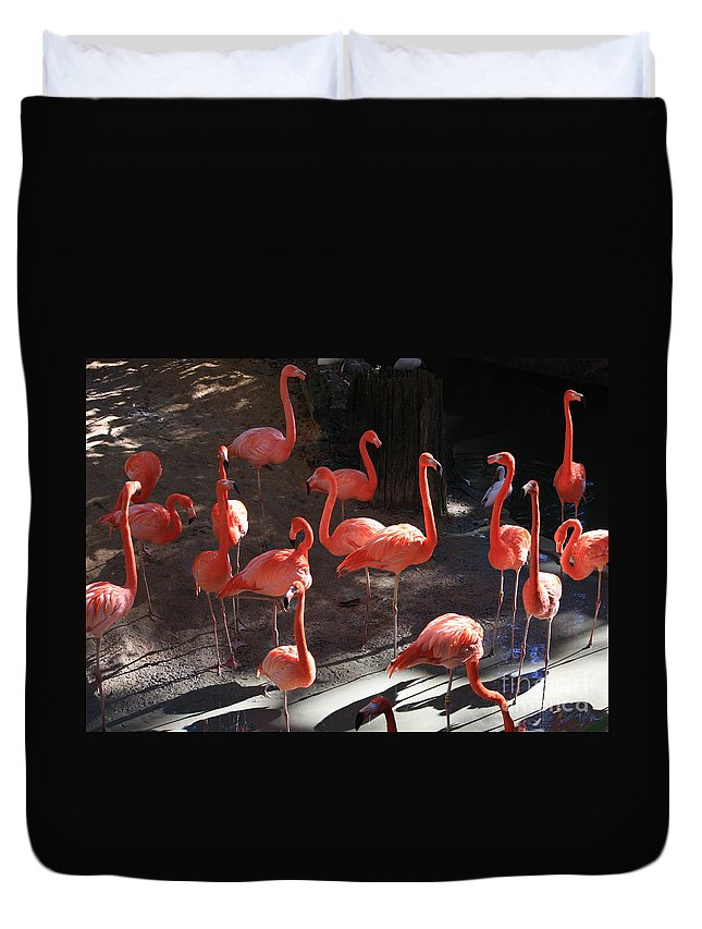 Pink Flamingos Duvet Cover featuring the greeting card Pink Flamingos by Carol Groenen