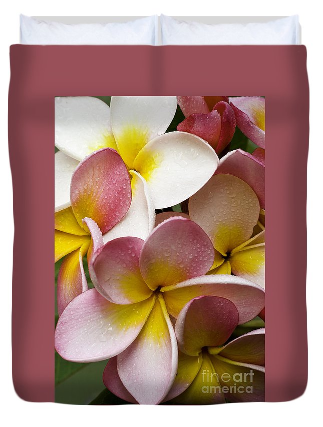 Pink Frangipani Duvet Cover featuring the photograph Pink frangipani by Sheila Smart Fine Art Photography