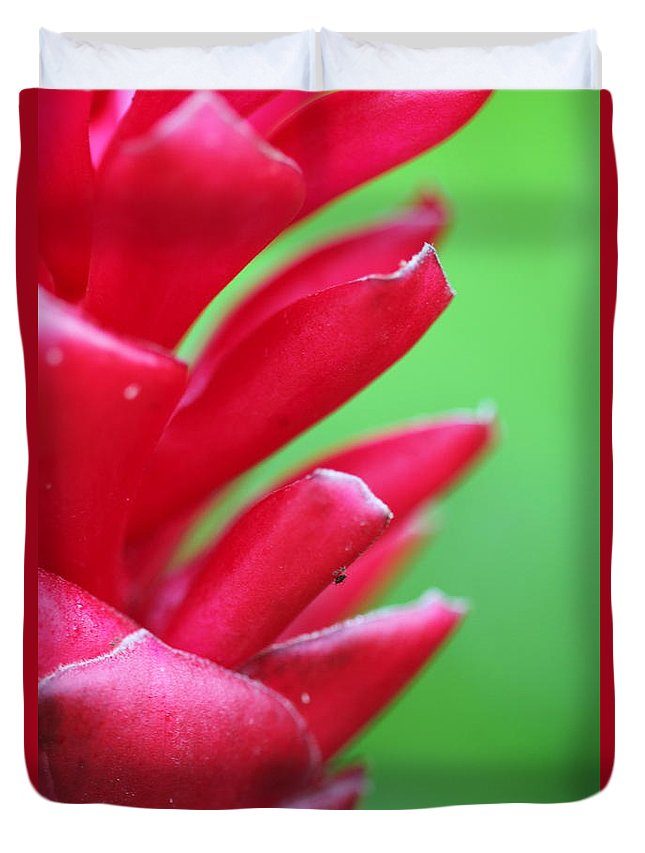 Ginger Duvet Cover featuring the photograph Pink Ginger by Nadine Rippelmeyer