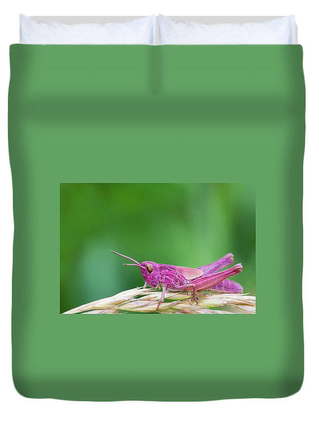 Animal Duvet Cover featuring the photograph Pink Grasshopper by Chris Smith