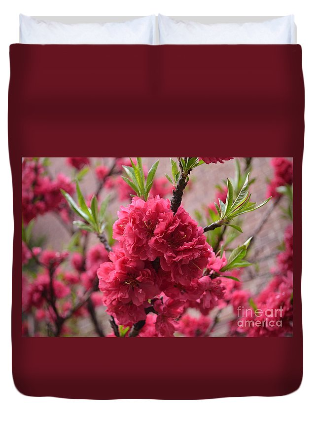 Flower Duvet Cover featuring the photograph Pink In Bloom by Des Brownlie