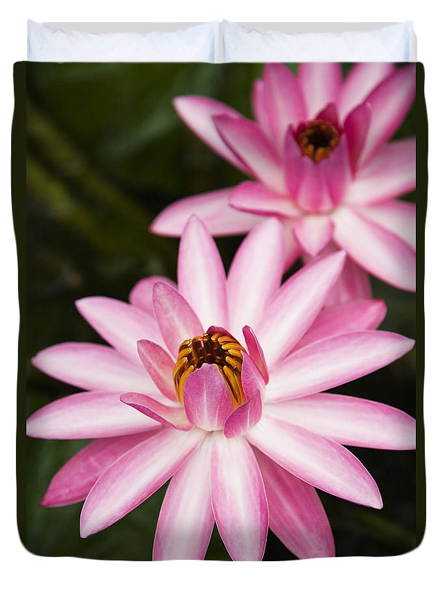 Afternoon Duvet Cover featuring the photograph Pink Lotus Blossoms by Dana Edmunds - Printscapes