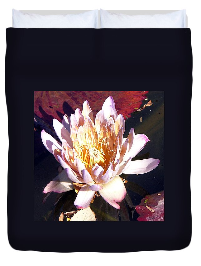 Water Lily Duvet Cover featuring the photograph Pink On Gold by John Lautermilch