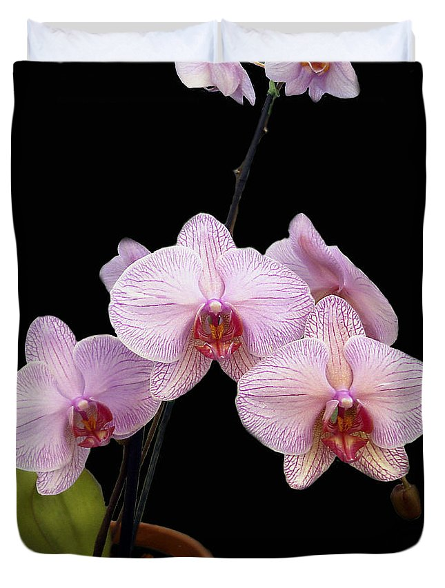 Flowers Duvet Cover featuring the photograph Pink Orchids by Kurt Van Wagner