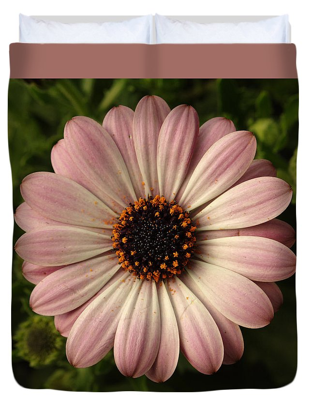 Flowers Duvet Cover featuring the photograph Pink Osteospermum by Adrian Wale