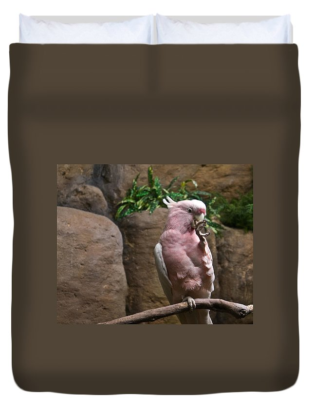 Pink Duvet Cover featuring the photograph Pink Parrot Nibbling Foot by Douglas Barnett