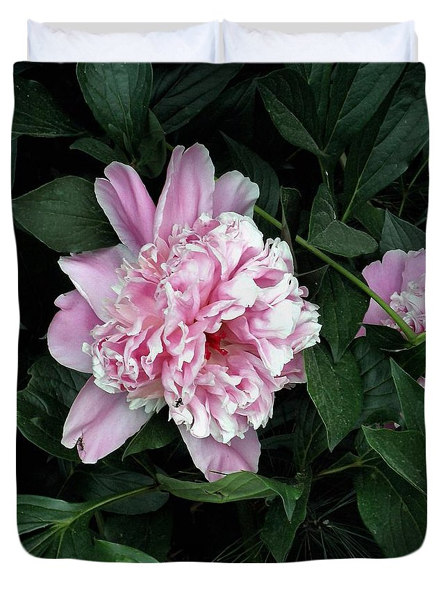 Peony Duvet Cover featuring the photograph Pink Peone by T Cook
