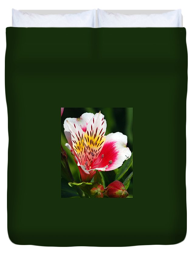 Peruvian Duvet Cover featuring the photograph Pink Peruvian Lily 1 by Amy Fose