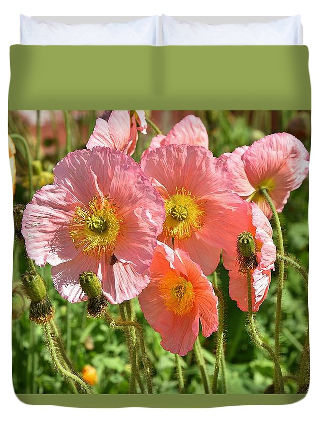Linda Brody Duvet Cover featuring the photograph Pink Poppies 2 by Linda Brody