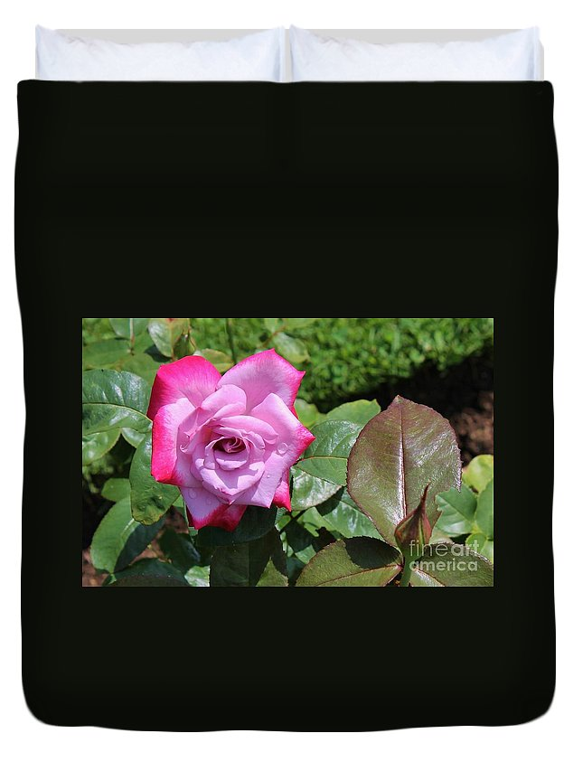 Pink Duvet Cover featuring the photograph Pink Rose 1 by Karen Desrosiers