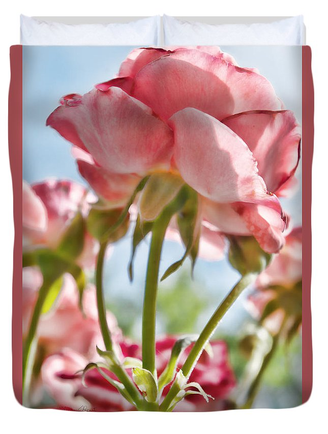 Pink Duvet Cover featuring the photograph Pink Rose Back Light by Sharon Popek