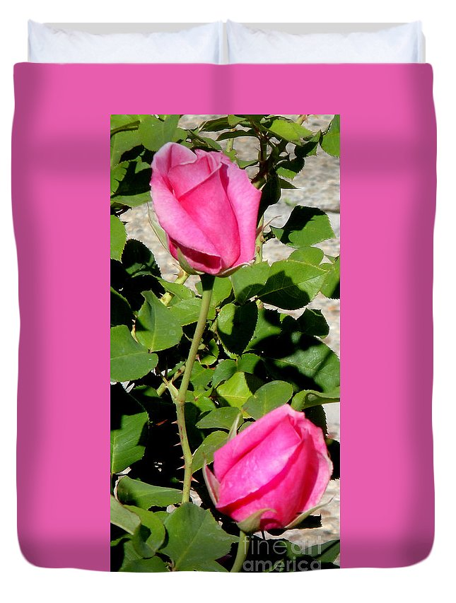 Pink Rose Buds Duvet Cover featuring the photograph Pink Rose Buds by Sofia Metal Queen
