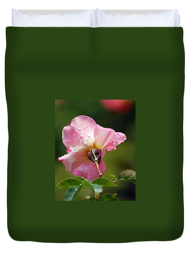 Rose Duvet Cover featuring the photograph Pink Rose In The Rain 2 by Amy Fose