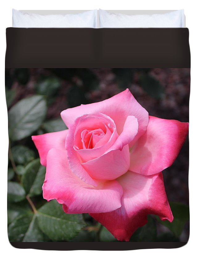 Pink Duvet Cover featuring the photograph Pink Rose by Sarah Helmy Aly