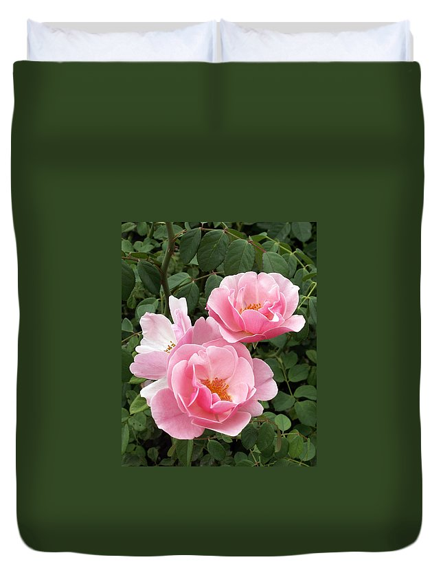 Roses Duvet Cover featuring the photograph Pink Roses 1 by Amy Fose